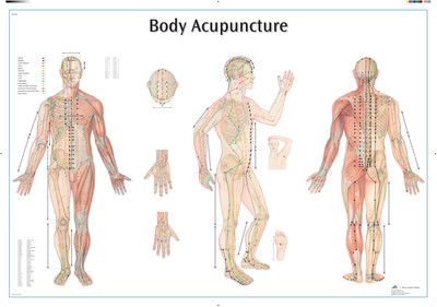 Akupunkturplansje 98 x 68 cm