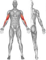 Biceps Flexion 4000, medical