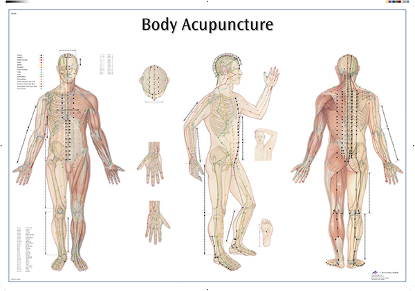 Akupunkturplansjer