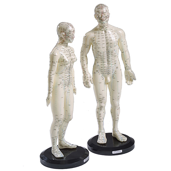 Akupunktur-modeller