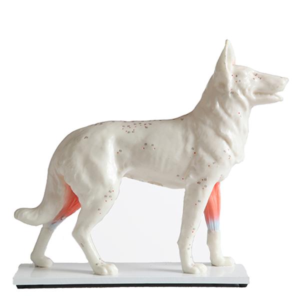 Akupunktiomalli - Koira 29 cm, pehmeä