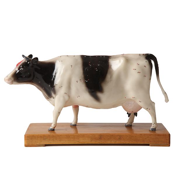 Akupunktiomalli - Lehmä