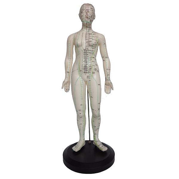 Akupunktiomalli - Nainen 47cm, pehmeä