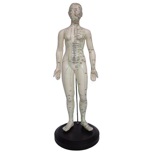 Akupunkturmodell Kvinna, 47 cm