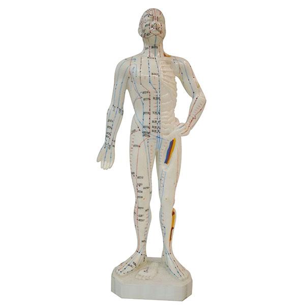 Akupunkturmodell Mann, 26  cm