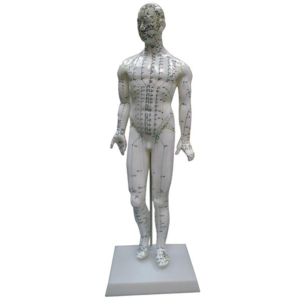 Akupunkturmodell Man, 47 cm